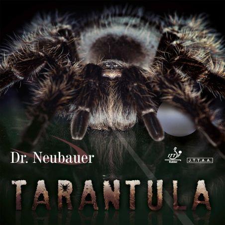 Dr. Neubauer Tarantula